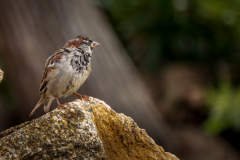 OPen PDI 3rd - Sparrows are not boring