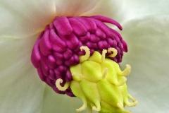 12 Wakehurst Flower MJ
