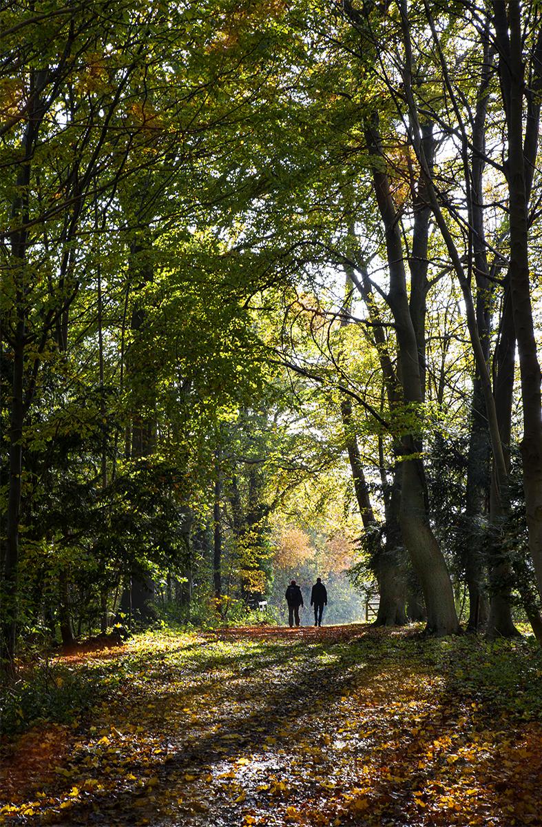 A Walk Through the Wood
