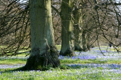 Spring Avenue, Anglesey Abbey