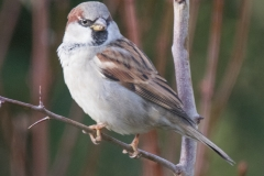 Birds-7730