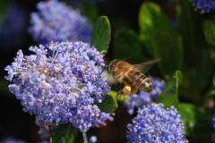 Honey for my honey