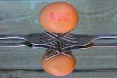 David-Waters-egg2 (1 of 1)