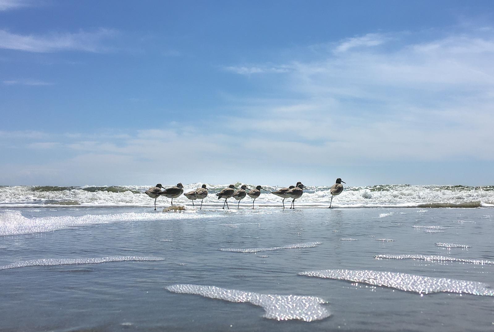One Legged Surf Walkers