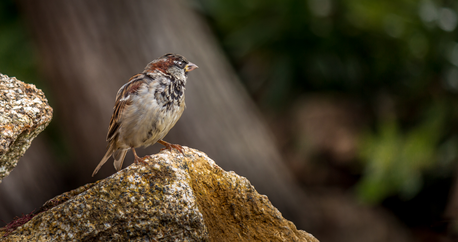 Sparrows are not boring