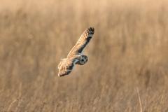 S E Owl-6565