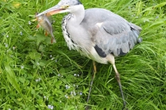9. Heron