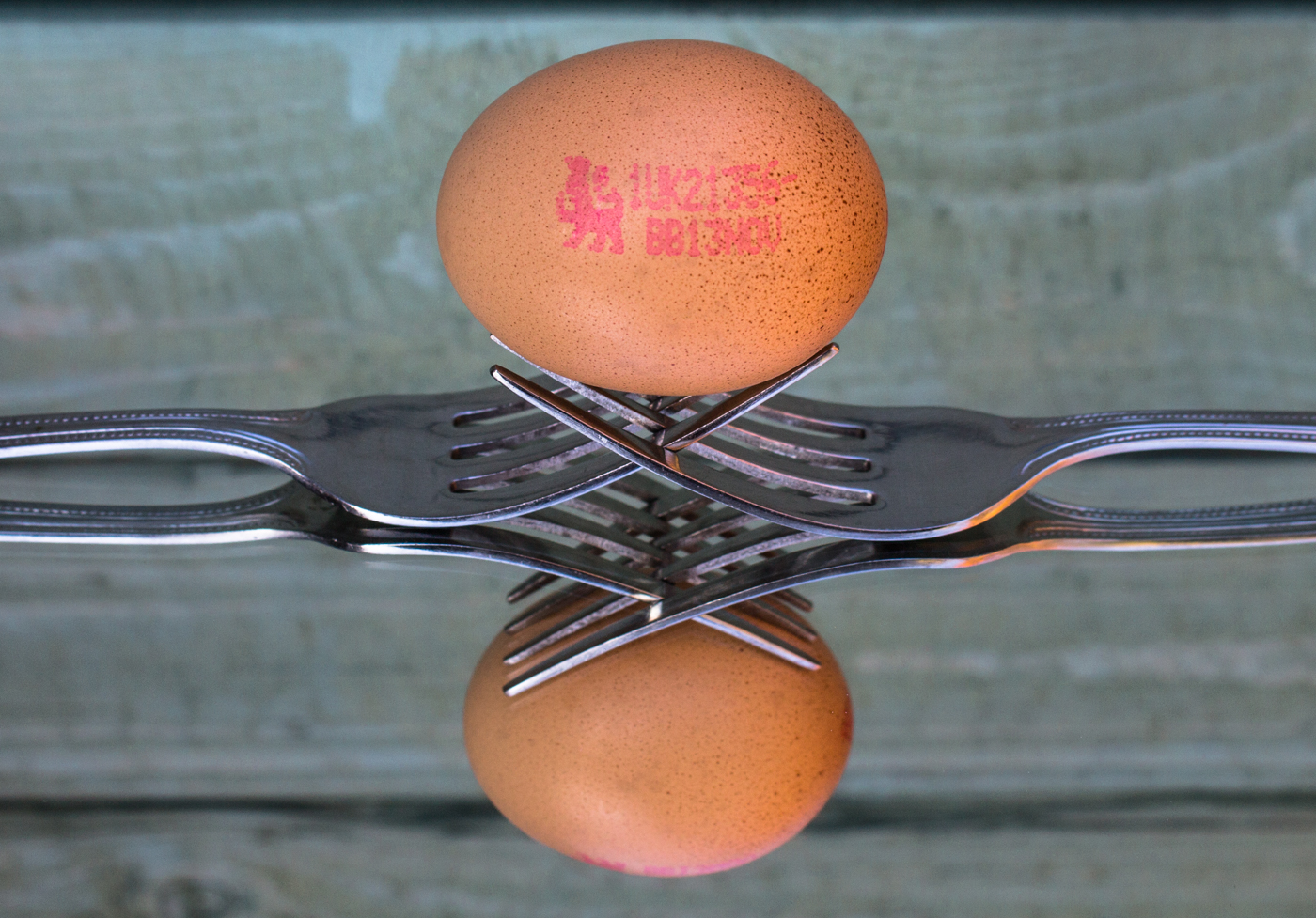David Waters egg2 (1 of 1)